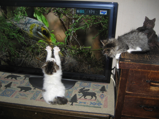 カワイイ猫 027