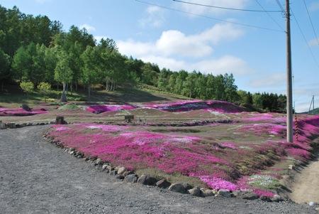 倶知安町 三島さんちの芝桜