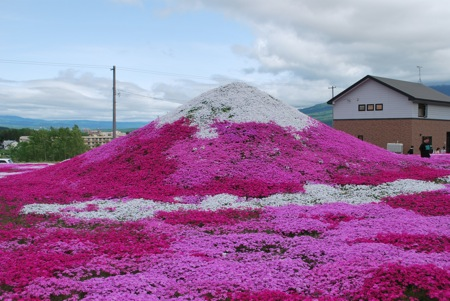 倶知安町 三島さんちの芝桜 2012その2
