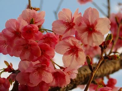 s-IMG_0108_20120412220847.jpg