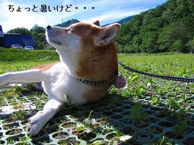 s-IMG_0646_20100802155518.jpg