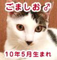 猫カフェ我が家・ごましお