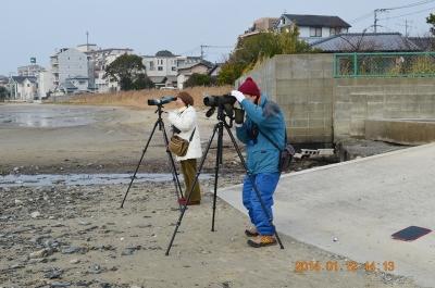 12水鳥調査
