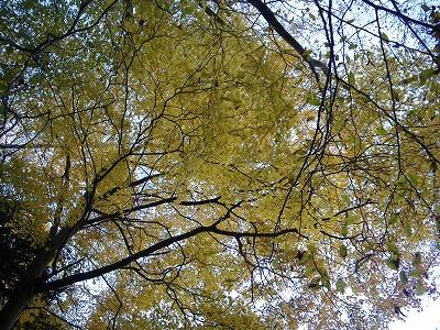 黄葉真っ盛り