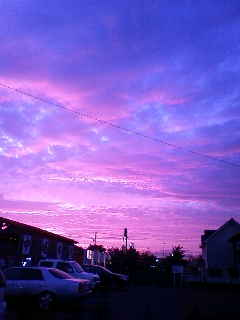 ピンク色になるんだ♪
