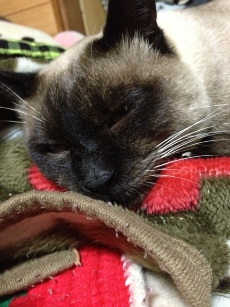 毛布の毛玉スゴイwww