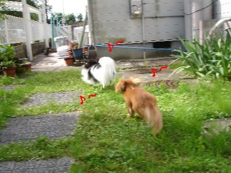 6_20100625132024.jpg