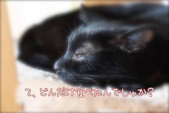 IMG_0431_20101011085258.jpg