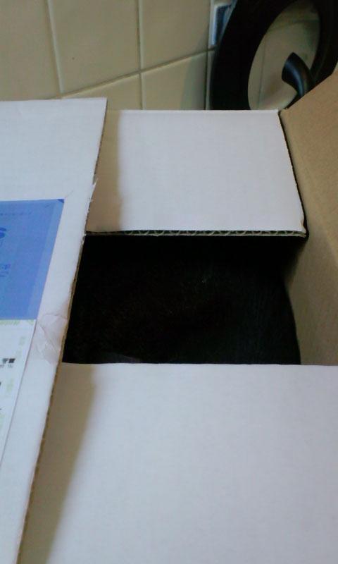 moblog_5aaf0786_20100827122953.jpg