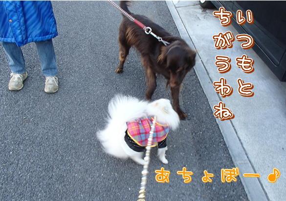 10_201401170752194f4.jpg
