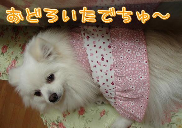 5_20140128202032e59.jpg