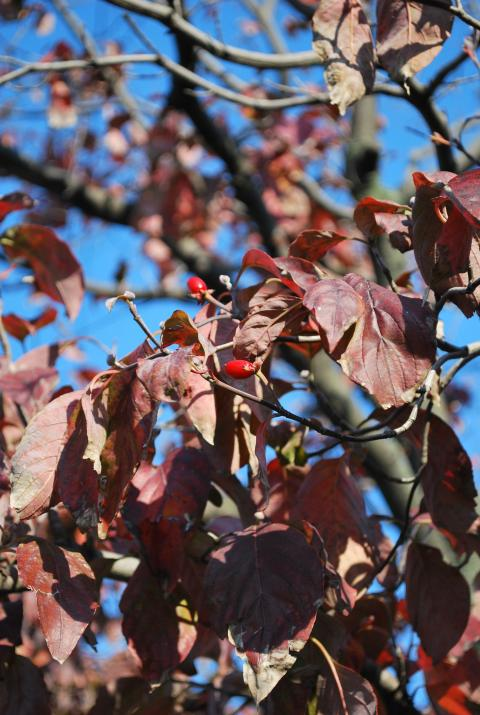 秋の空と赤い実