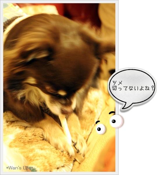 IMG_0619-20110216.jpg