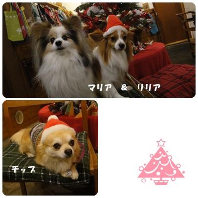 2013-12-106.jpg