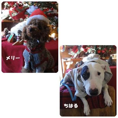 2013-12-110.jpg
