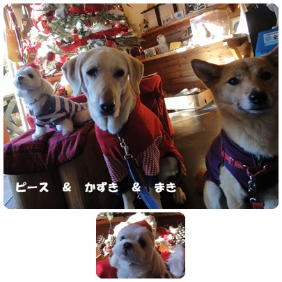 2013-12-111.jpg