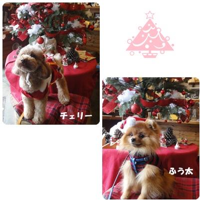 2013-12-124.jpg