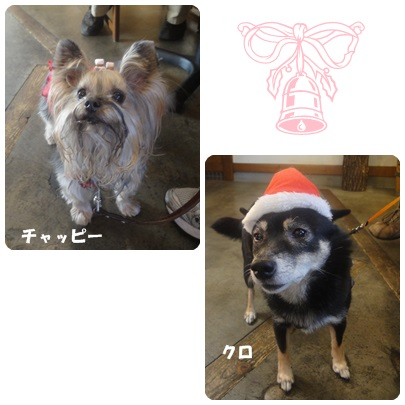 2013-12-133.jpg