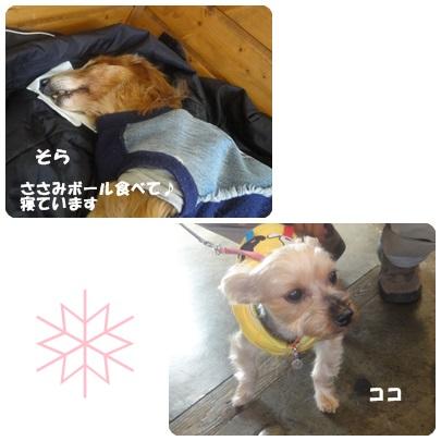 2013-12-141.jpg