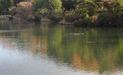 鏡山公園でアコーディオン20141129ー2