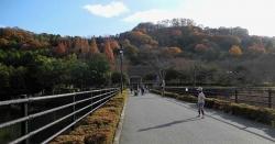 鏡山公園でアコーディオン20141129ー4