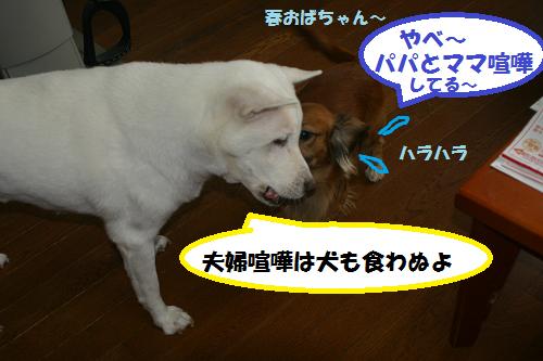 犬も食わぬ