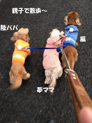 3わん散歩無題