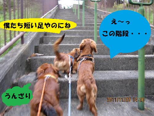 無題この階段