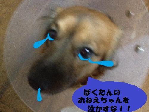 ~泣かすな