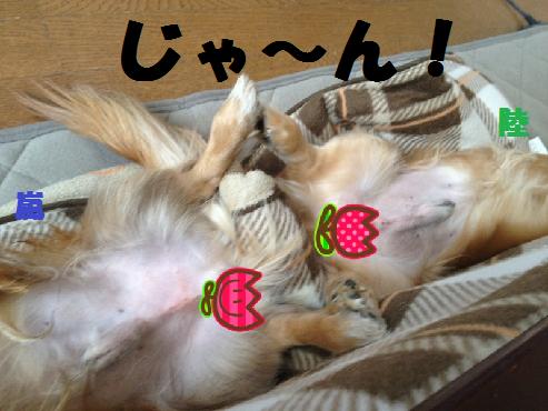 zじゃ~ん無題