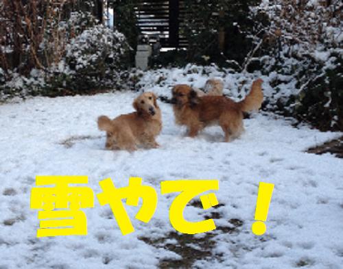 やで無題雪