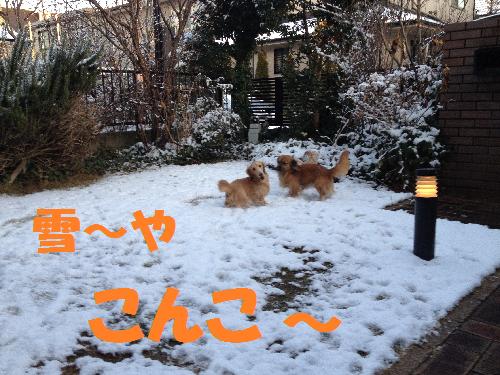 こんこ雪や