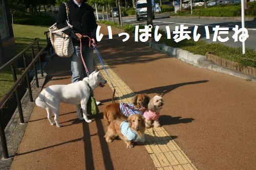 歩いた一ぱい