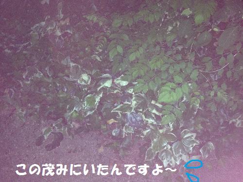 この茂み無題