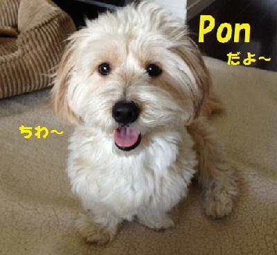 無題pon tyann