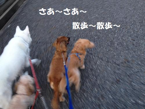 ~散歩~散歩