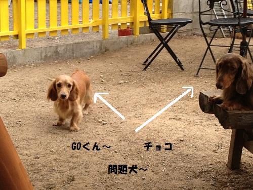 2わん問題犬