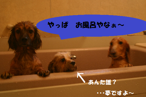 でしょお風呂