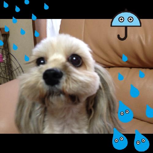 taifuu 1