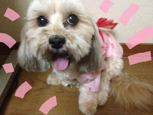 kimo.png