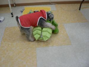 110710お茶犬1