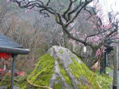 iwakuni201136-2.jpg