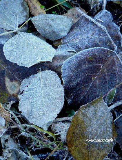 クズの落葉葉