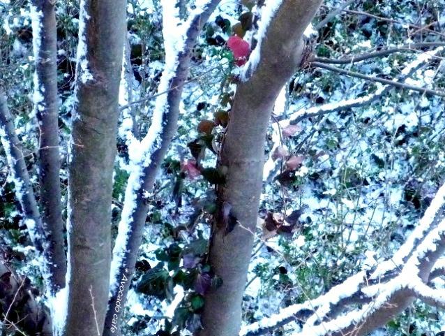 雪と赤い葉