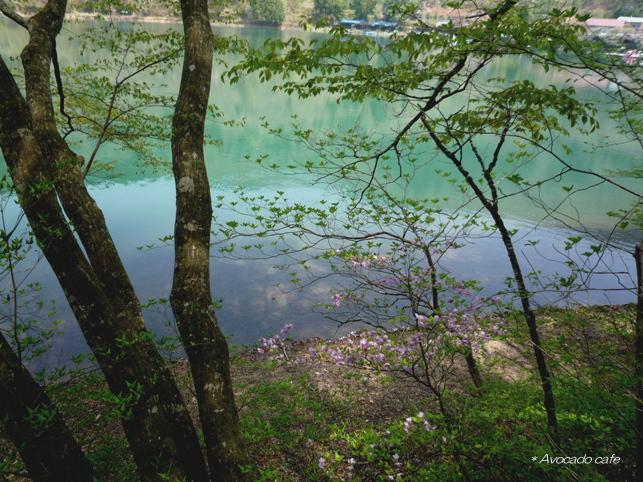 四尾連湖の桜