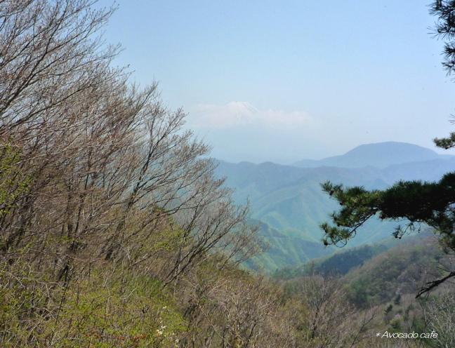 蛾ガ岳から富士山
