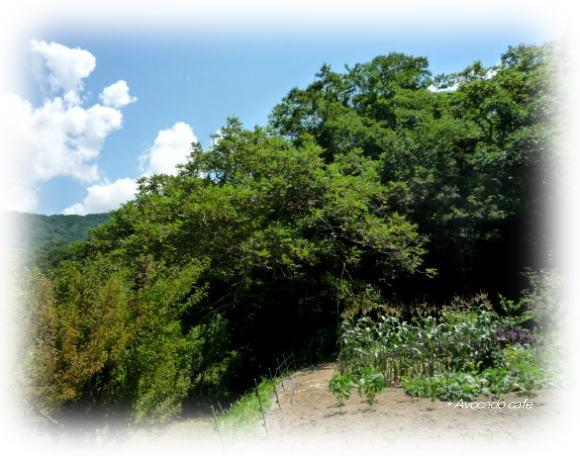 畑のおくの胡桃の木