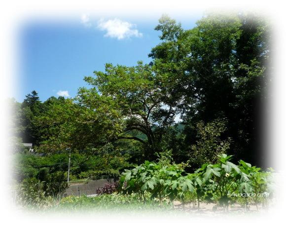 胡桃の木と畑