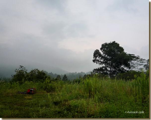 早朝の草原