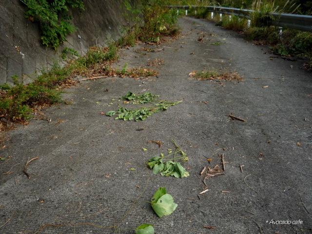 落ちている大豆の枝